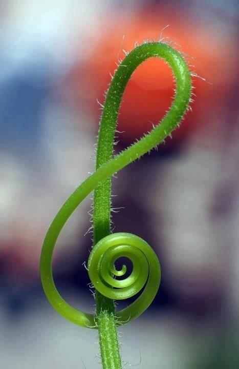 klucz-wiolinowy-roslina-trawa-zielony-natura-muzyka-doremisie-wiosna-wiosenna-promocja-2019